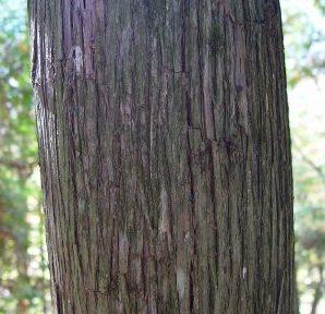 white-cedar-bark